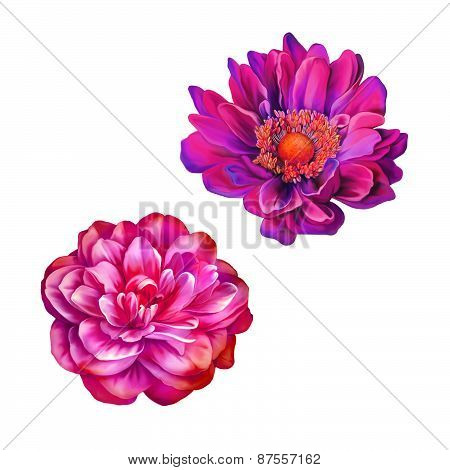 Pink Red Mona Lisa Flower, Pink Rose Camellia Flower isolated on white background