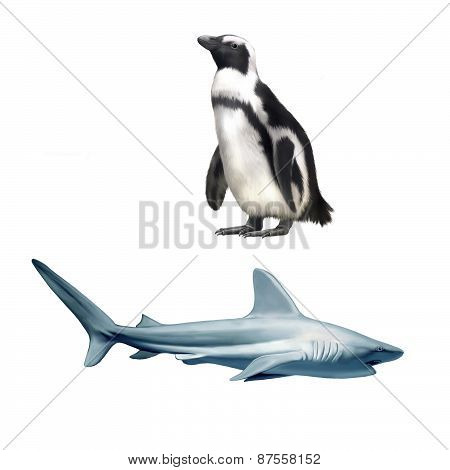 a large grey reef shark showing the mouth and teeth, Common seal lying, facing, Phoca vitulina, and