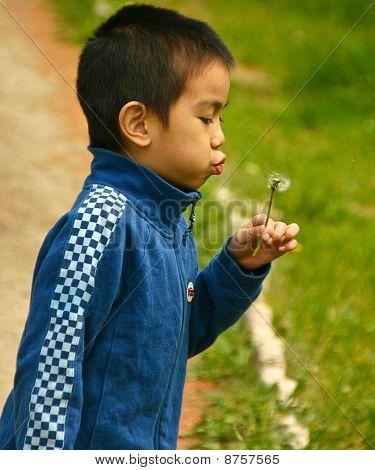playing dandelion