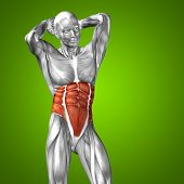 Concept or conceptual 3D chest human anatomy or anatomical and muscle on green gradient background poster