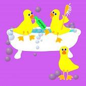 three ducks having fun taking a bath. poster