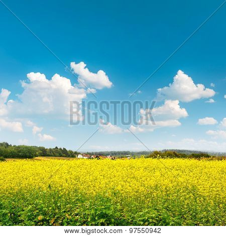 Rapeseed Field Over Cloudy Blue Sky. Beautiful Countryside Landscape