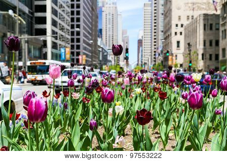 Tulips and Traffic