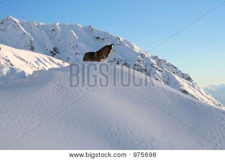 Husky Overlook