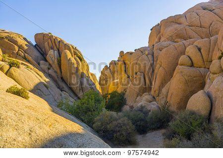 scenic Jumbo rock in Joshua Tree National Park
