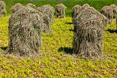 beautiful landscape in the tirolean Alps fresh smelling grass is stapled for drying looks like figures in the countryside poster