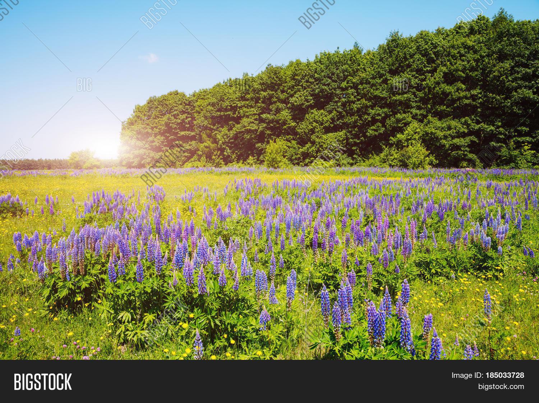 Stunning Fresh Flowers Image Photo Free Trial Bigstock