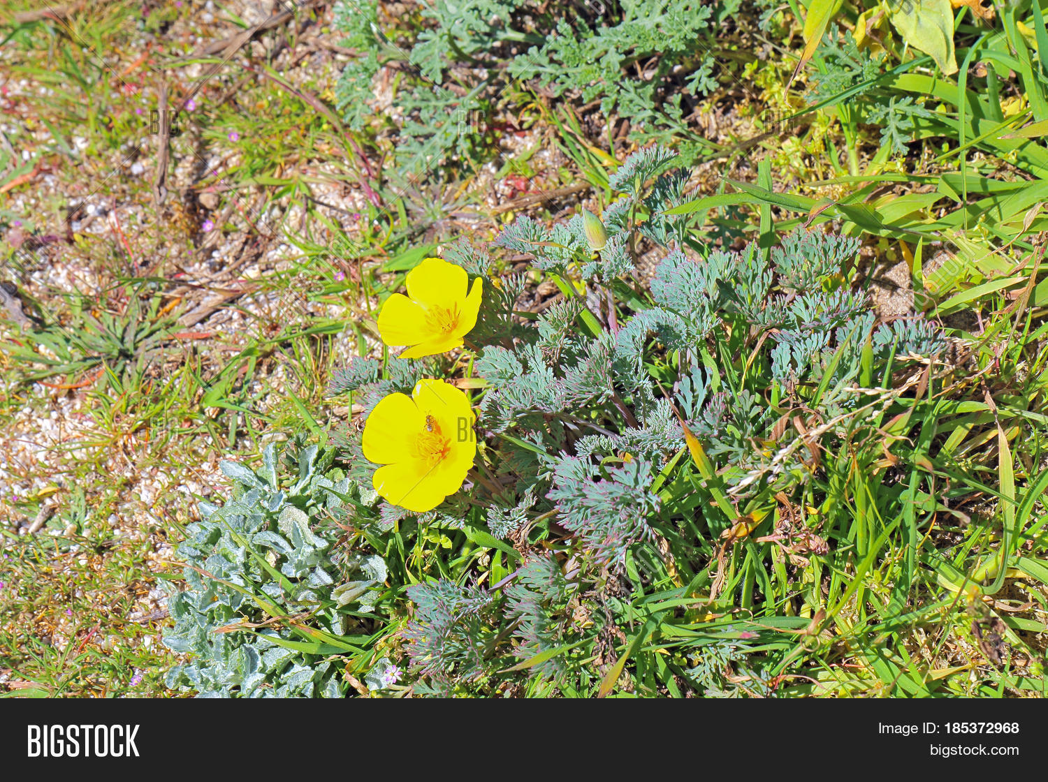 Early Spring Yellow Image Photo Free Trial Bigstock
