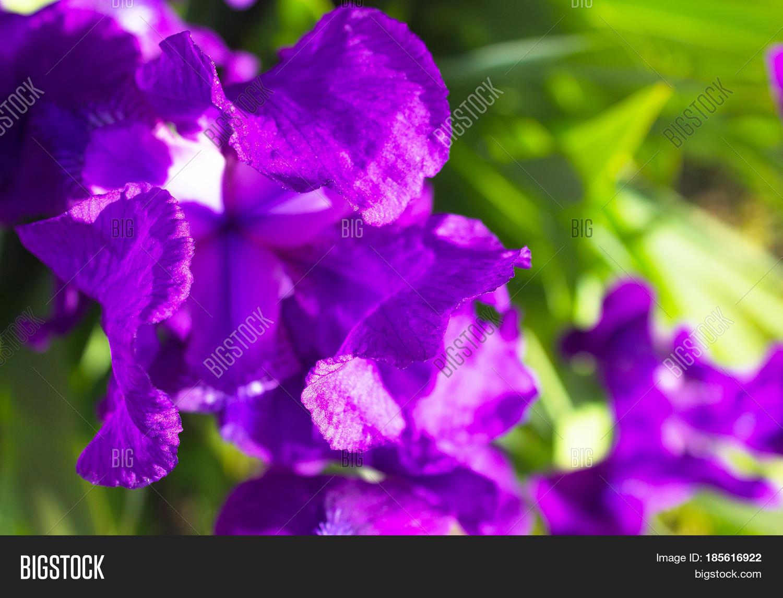 Spring Flower Image Photo Free Trial Bigstock