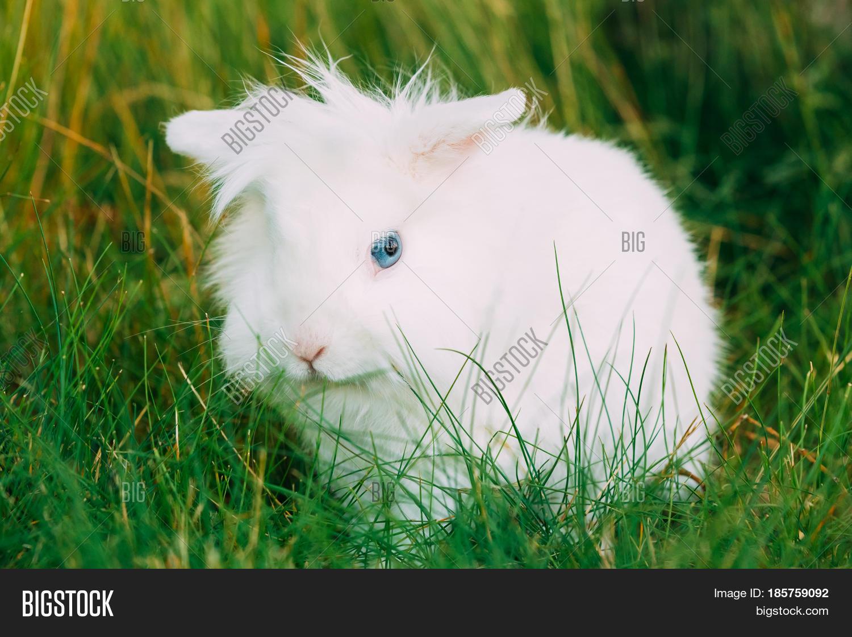 Decorative rabbits: breeds, their description and photo. Domestic dwarf rabbits: description, care, content 67