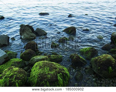 Still sea shore with blue water and stones. Mossy seaweed stones on volcanic beach. Tropical island wild coast. Still sea with sky reflection and water ripples. Exotic island evening. Tropic seaside
