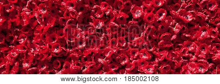 Red ornamental poppies to celebrate the lives of men and women who died during wars.