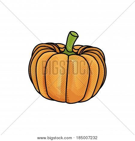 draw pumpkin vegetable nutrition vitamin food health vector illustration