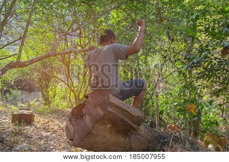 pine wood logs in forest. Boy sitting on a log