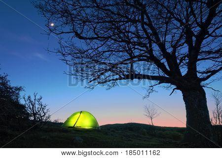glowing tent under bare tree in Nebrodi Park, Sicily