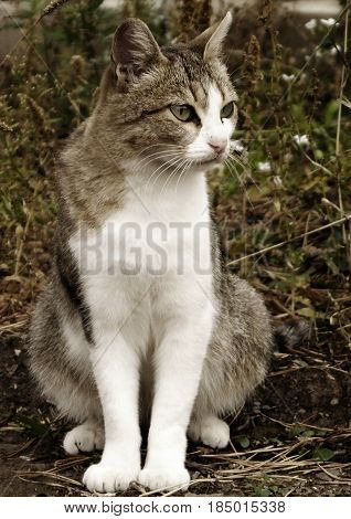Cat, gray cat, homeless cat. The image gray stray cat sitting on the grass.