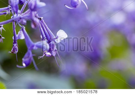 Purple flower closeup with dewdrops and soft focus background