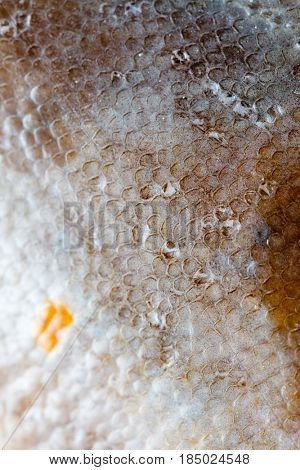 flounder fish texture