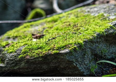 Close-up of moss on a rock. Selective focus of a clump of green moss covering a rock in the forest.