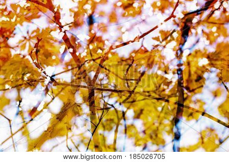 Autumn Abstract Background. Branches leaves. Red orange yellow earthy colors