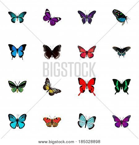Realistic Lexias, Pipevine, Morpho Hecuba And Other Vector Elements. Set Of Butterfly Realistic Symbols Also Includes Pink, Fly, Blue Objects.