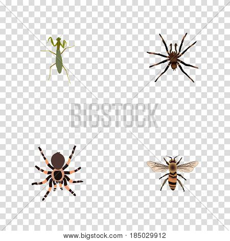 Realistic Grasshopper, Arachnid, Wisp And Other Vector Elements. Set Of Animal Realistic Symbols Also Includes Tarantula, Locust, Arachnid Objects.