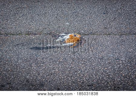 Animal corpse killed by car on a street in Porto city Portugal