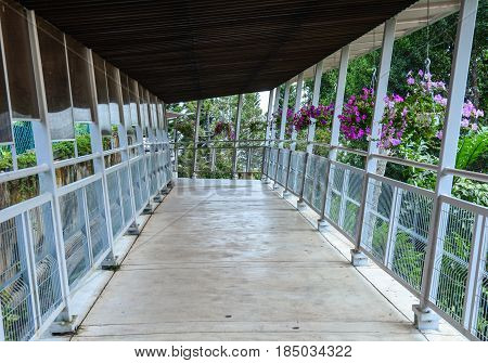 Wooden Foot Bridge In Penang, Malaysia
