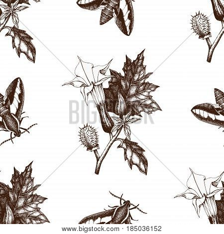 Vintage seamless pattern with Ink hand drawn sphinx butterflies illustration and Thorn-apple flower sketch. Vector background with highly detailed moth and poisonous plant sketch