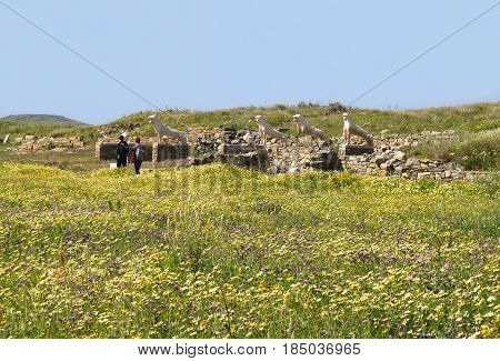 People Walking among Wild Flower Fields at the Terrace of the Lions, Archaeological Site of Delos Island, Greece