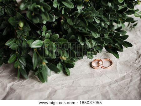 Wedding. Wedding Rings On Kraft Bumacov With Green Leafy Plants. Wedding Rings On A Branch.