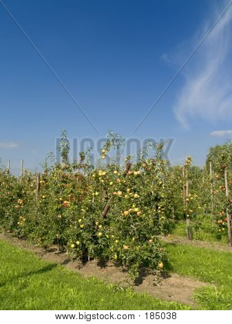 Agriculture, Apples.