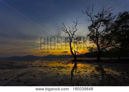 tree in the sea in the sunset