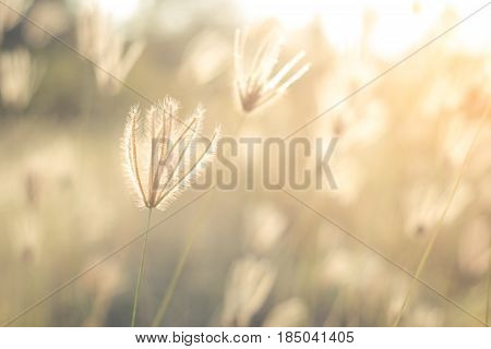 Beautiful nature landscape - Alpine meadow. Grass closeup with sunbeams. Beautiful Nature landscape with sun flare. Vintage Sepia toned  / soft focus picture