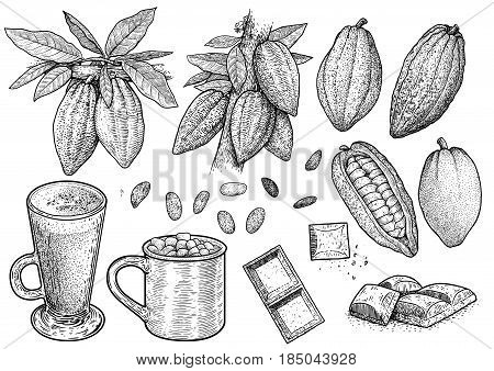 Cocoa illustration, drawing, engraving, ink, line art