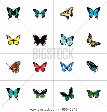 Realistic Papilio Ulysses, Summer Insect, Beauty Fly And Other Vector Elements. Set Of Beautiful Realistic Symbols Also Includes Fly, Green, Yellow Objects.