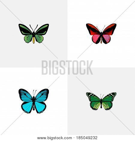 Realistic Birdwing, Tropical Moth, Callicore Cynosura And Other Vector Elements. Set Of Beautiful Realistic Symbols Also Includes Butterfly, Blue, Cynosura Objects.