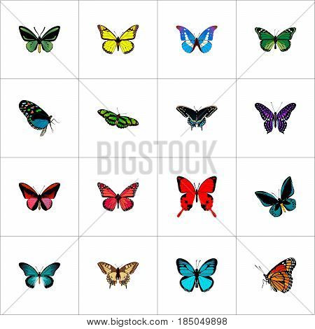 Realistic Tropical Moth, Hairstreak, Pipevine And Other Vector Elements. Set Of Butterfly Realistic Symbols Also Includes Green, Brown, Monarch Objects.