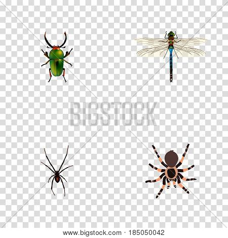 Realistic Insect, Spinner, Tarantula And Other Vector Elements. Set Of Animal Realistic Symbols Also Includes Spinner, Arachnid, Insect Objects.
