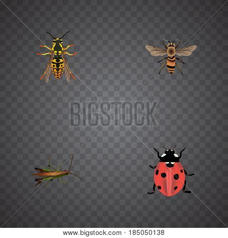 Realistic Bee, Locust, Ladybird And Other Vector Elements. Set Of Animal Realistic Symbols Also Includes Wasp, Wisp, Grasshopper Objects.