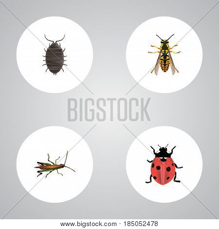 Realistic Bee, Dor, Locust And Other Vector Elements. Set Of Animal Realistic Symbols Also Includes Dor, Wisp, Insect Objects.