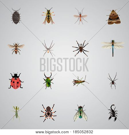 Realistic Locust, Bee, Housefly And Other Vector Elements. Set Of Bug Realistic Symbols Also Includes Ladybird, Bug, Spider Objects.