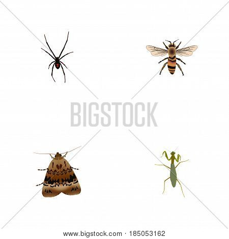 Realistic Spinner, Grasshopper, Butterfly And Other Vector Elements. Set Of Hexapod Realistic Symbols Also Includes Housefly, Spider, Spinner Objects.