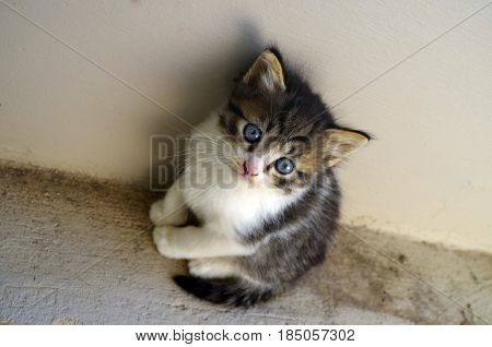 Little grey cat standing near a wall.