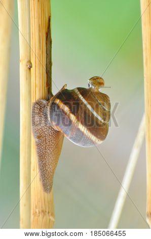 Baby snail on big mother snail shell. Snails on stem after rain
