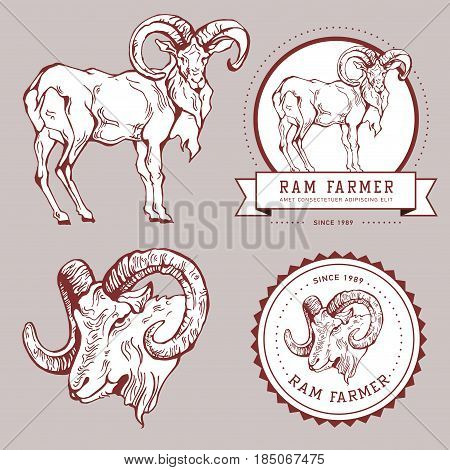 Vintage hand draw ram label. Graphic element, badge, emblem, logo, insignia, sign, identity, logotype, poster. Stroke hipster illustration with typographic for t-shirt prints. Ram farmer hunting