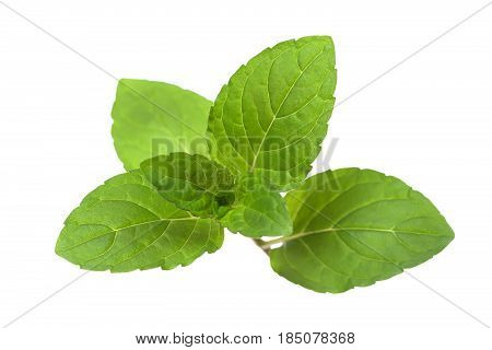 Green juicy elastic mint leaves isolated on white background