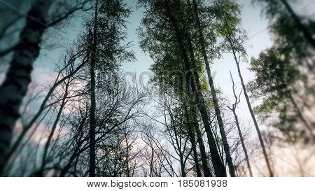 Spring Forrest. Fresh Green Woods in the Forest of Kursk.