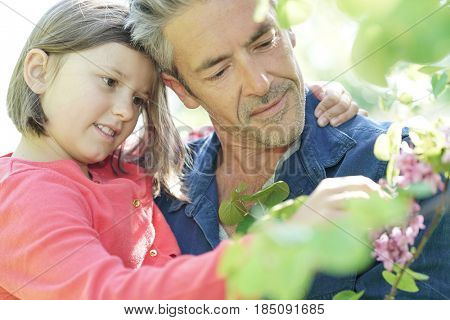 Daddy with girl in garden looking at flower buds