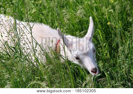 kid in a meadow on thr grass. photo